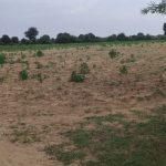 ભાભર અને સુઇગામ પંથકમાં આગામી સમયમાં વરસાદ ન આવે તો ખેડૂતો એ વાવેલ પાક માં નુકશાન થવાનો ભય