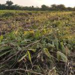 અમરેલી જીલ્લાના કુકાવાવ, વડિયા તાલુકા મા વરસાદ ના કારણે થયું લાખો નું નુકશાન
